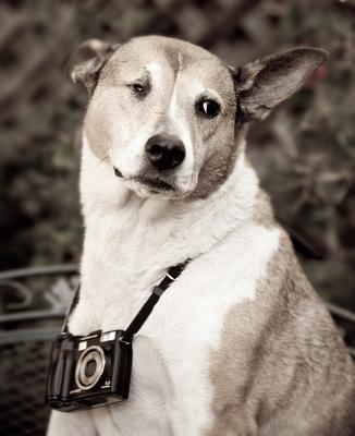 Dog, Rescue, Camera, One Eye,